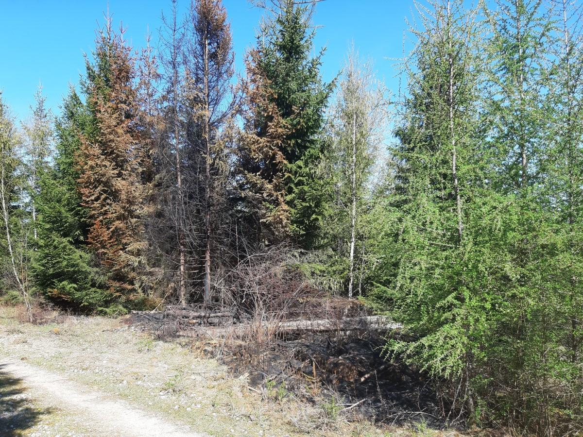 Waldbrand kurz vor Ostern 2020 - an der Kommunalgrenze zwischen Attendorn und Finnentrop
